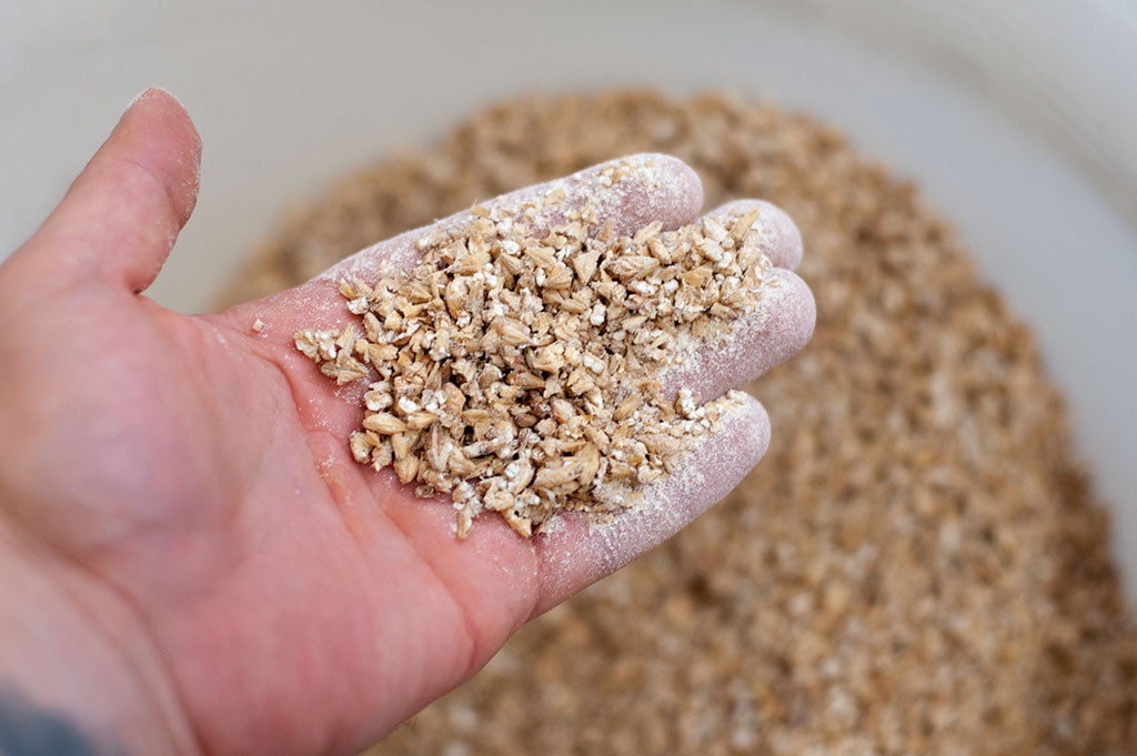 Crushed home brew malted grains for brewing a German Marzen lager