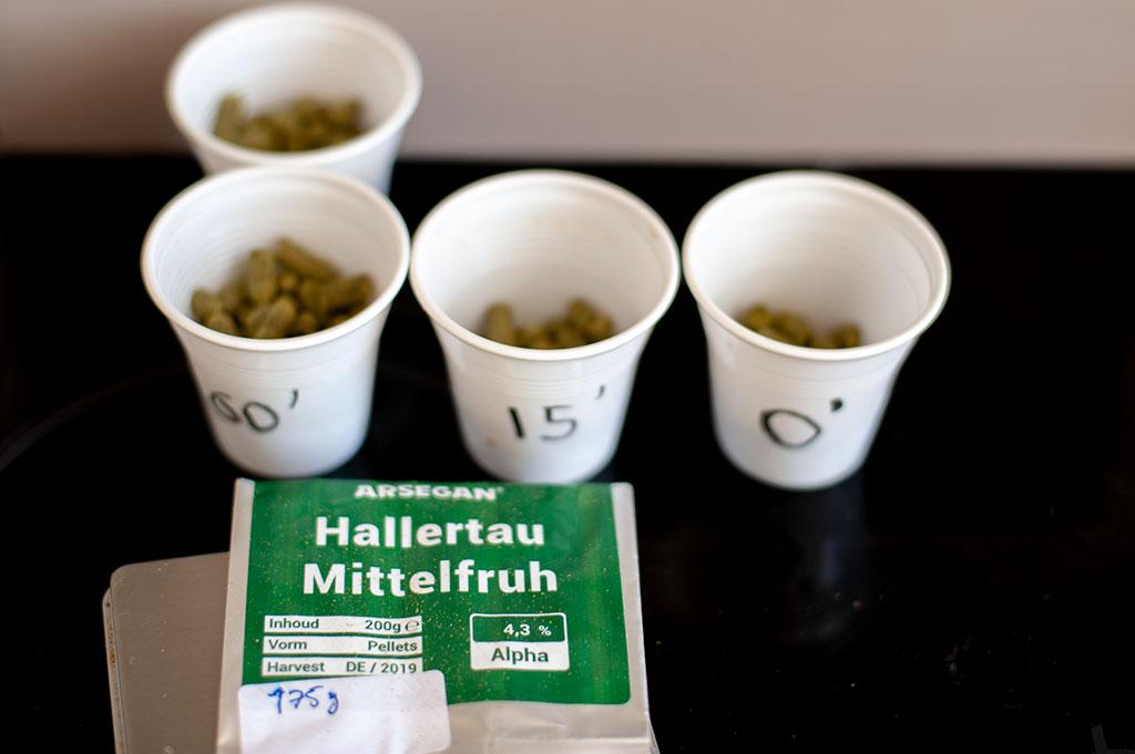 Hallertau Mottelfruh hops measured for adding to the brew